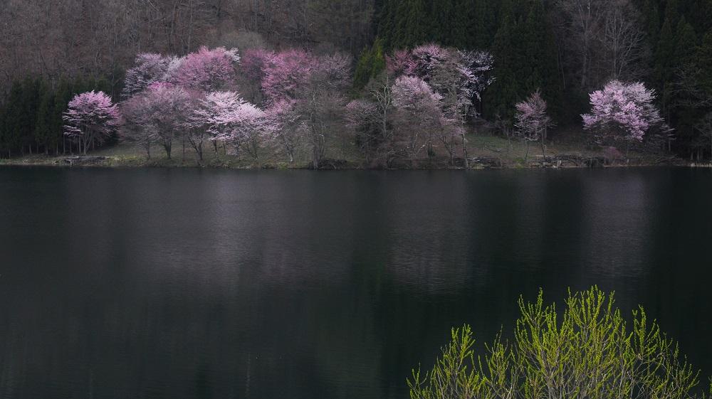 中綱湖15・4・20