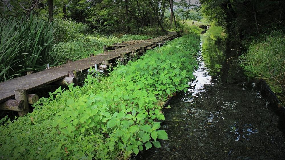 湧き水の水路