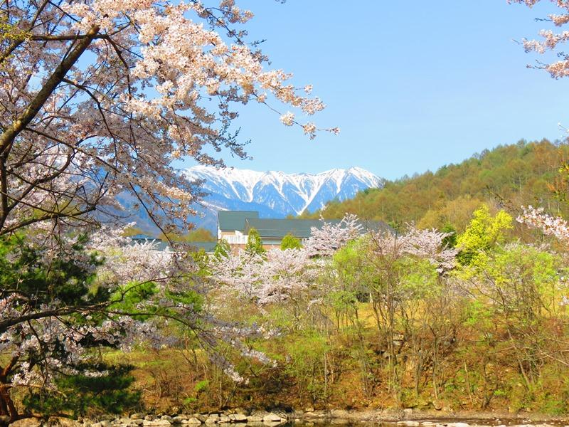 桜IMG_3810