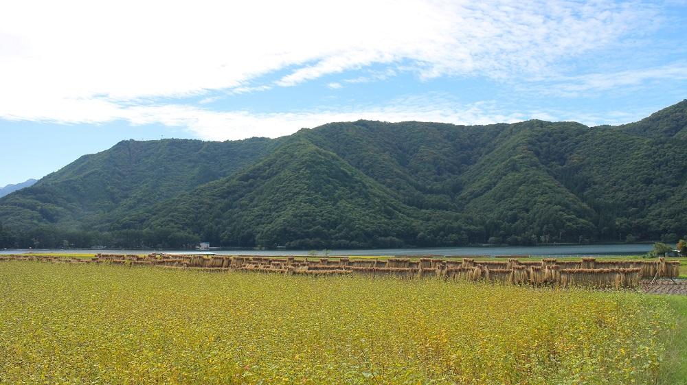 木崎湖の蕎麦